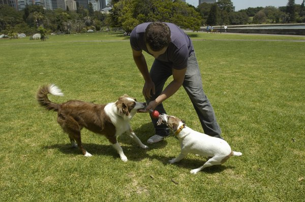 Keeping your pooch away from unfamiliar dogs can help curb the spread of TVT.