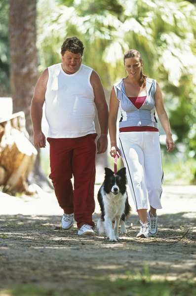 Risk factors for stroke in dogs, like humans, include obesity and heart disease.