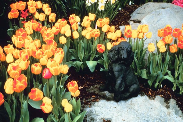 Although this dog is safe among the tulips, you shouldn't let your dog eat them.