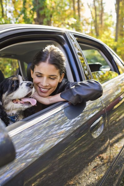 Driving with a dog in your lap puts your pup at risk.