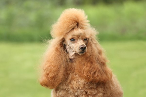 """My stylist thinks I will get best in show this year."""