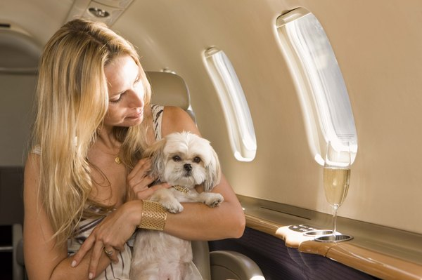 Keep a watchful eye on your dog when traveling at high altitudes.
