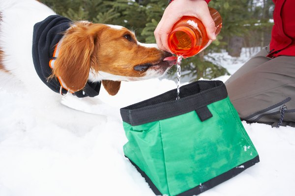 A portable pet dish is a good way to keep your pooch hydrated on an excursion.