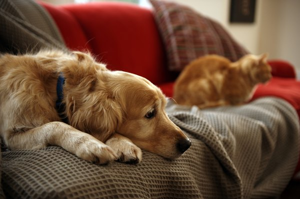 With the right introduction, dogs and cats can cohabit peacefully.