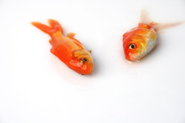 How to reduce ammonia in a saltwater aquarium animals for Ammonia in fish tank