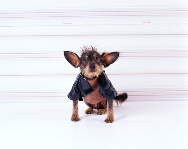 You can make a cute a dog's coat from soft fleece fabric.