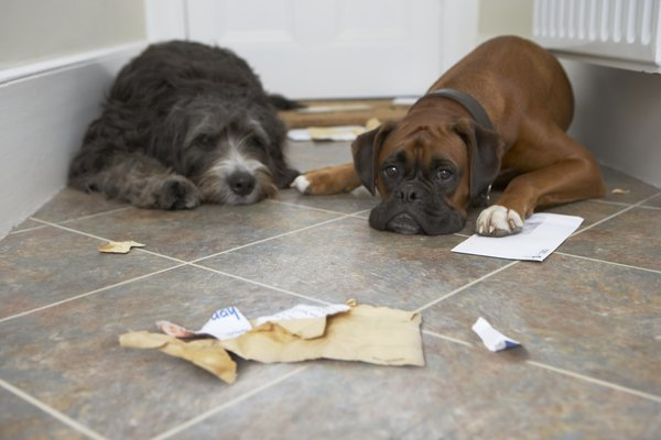 """Stuffing my belly full of paper was a horrible mistake."""