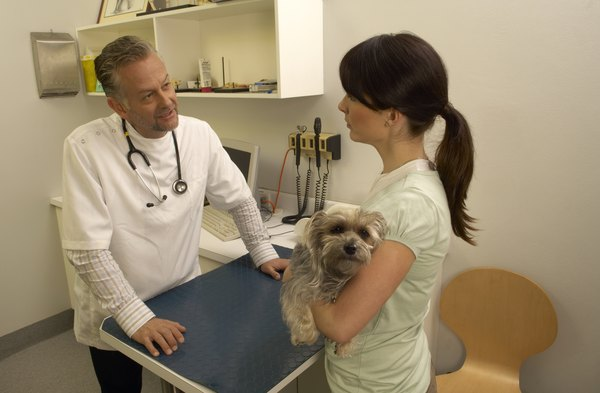 If your dog shows symptoms of food allergies, discuss options with a veterinarian or nutrition consultant.