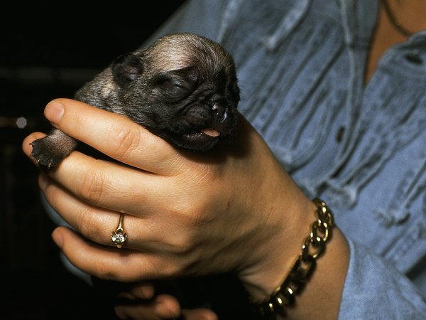 Puppies do not have developed sight or hearing when first born.