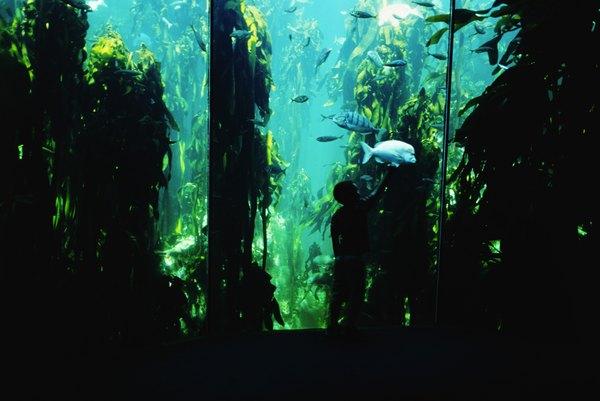 how to stop algae bloom in aquarium