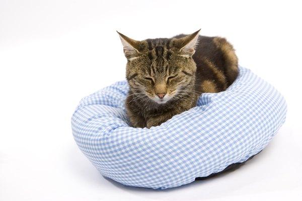 Pet Bowl Arthritic Cat