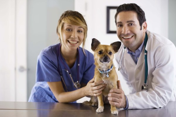 Regular trips to the vet help keep your dog's vaccinations on track.