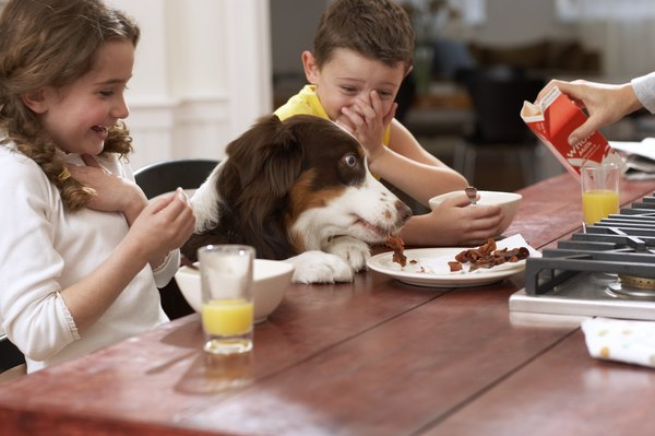 Take care to note what's in the food you give your puppy.