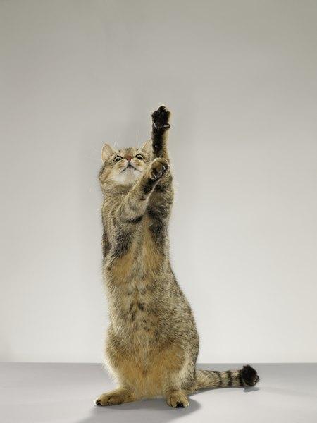 Cosequin Vs Dasuquin For Cats Pets