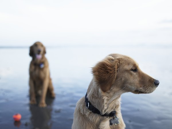 Introduce a new dog carefully for a successful transition.