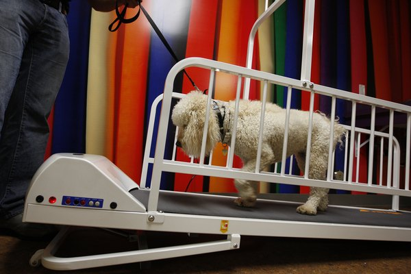 Side rails help some dogs feel more comfortable on a trotter.