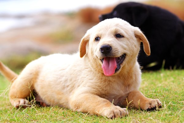 Pick up your pup's poo and keep your yard clean to decrease risk of roundworm infection.