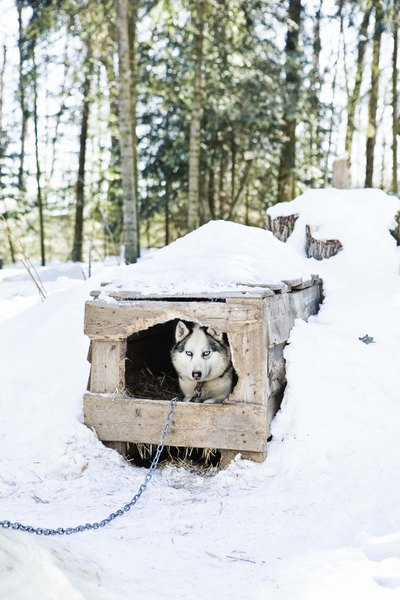 Alternative to cedar shavings for dogs pets - Keeping outdoor dog happy winter ...