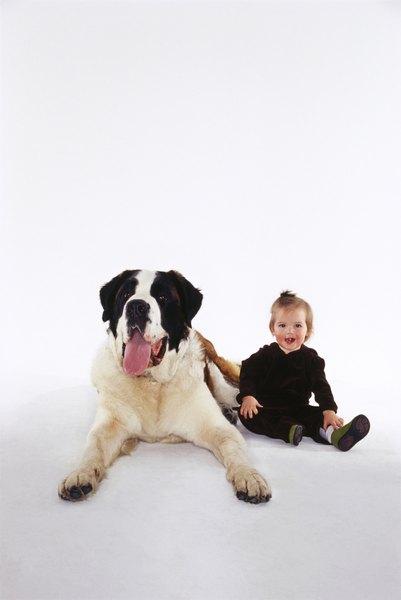 Lovable Dog Breeds