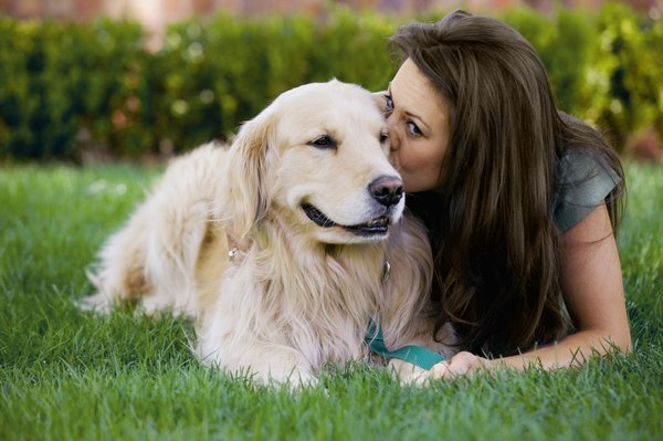 Dogs thrive on human attention.