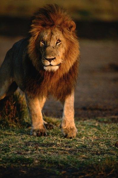 African Grassland Animals List