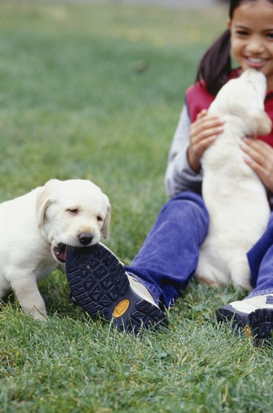 It is your job to teach your puppy about acceptable biting behavior.