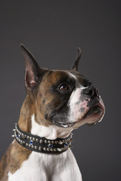 Spikes and jewels decorate this handsome dog collar.
