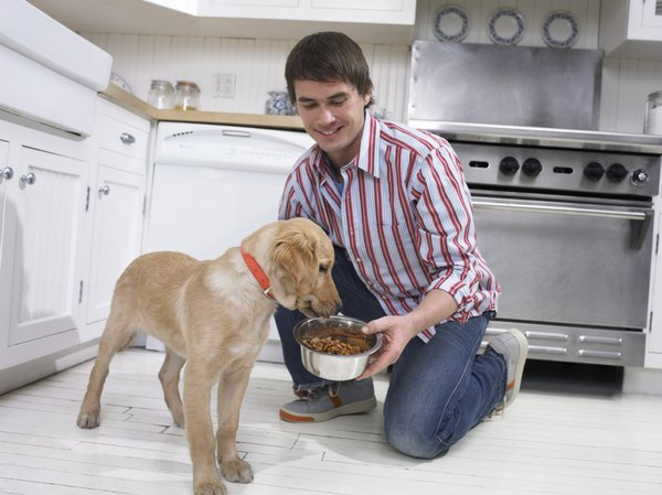 Your pet's food is an important part of her life.