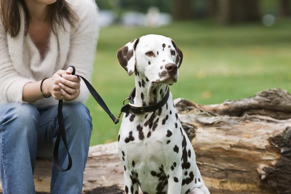 Dalmatians aren't all black and white.