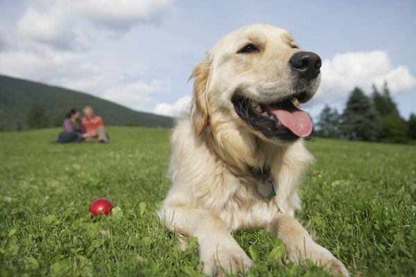 Diabetes and lymphoma don't have much to do with each other when it comes to a dog's health.