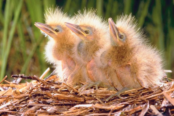 How Many Days Until a Baby Bird Can Open Its Eyes ...