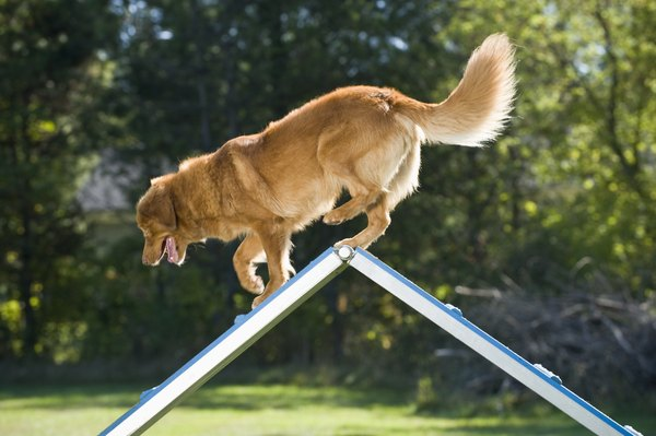 All dogs can benefit from obstacle courses created to police K-9 specifications.