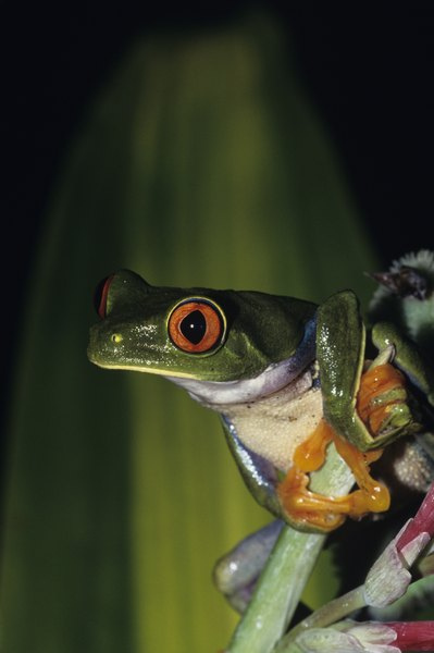 What Eats Frogs in the Rainforest? | Animals - mom.me