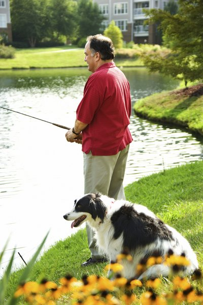 Your dog can remain a healthy companion well into his golden years.