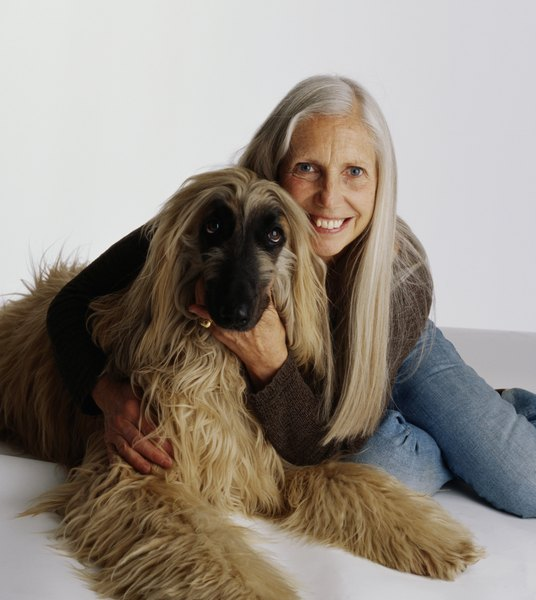 A dog with long hair is more likely to experience problems due to fur balls.