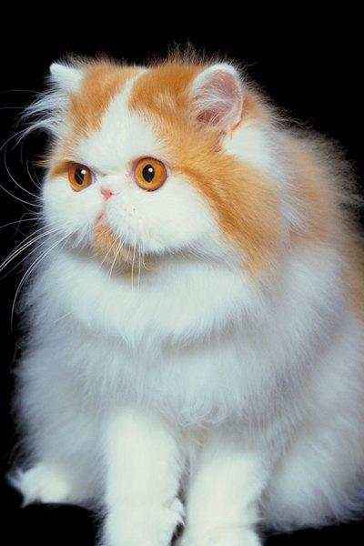 original keyboard cat