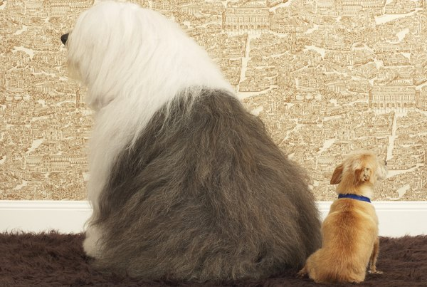 You might never notice raised hackles on long-haired breeds.