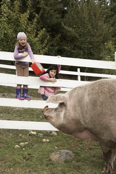 How To Stop Pigs From Going Under My Fence Animals Mom Me