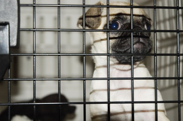 The ideal dog crate will give her enough room to stand up and turn around in.