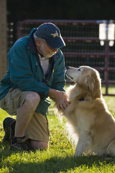 Older dogs are prone to developing lipomas as they age.