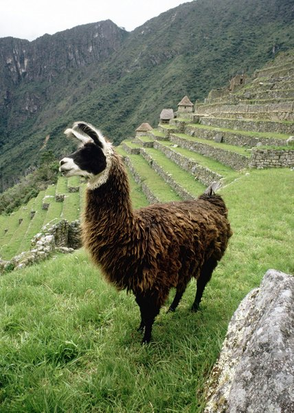 Description of the geography of the central andes how it for Terrace farming meaning