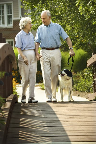 The right breed for a senior citizen depends on their lifestyle.