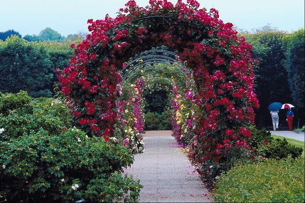 A rose-covered arbor is a stunning structure