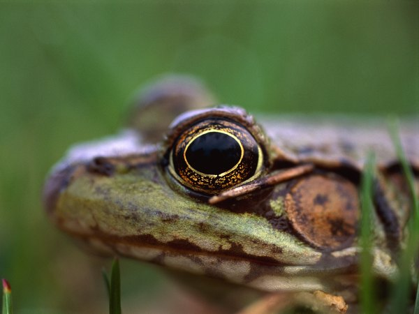 What is a frog 39 s transparent eyelid used for animals for What fish has eyelids