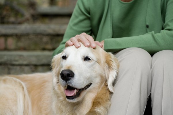 Older dogs frequently develop benign fatty tumors.