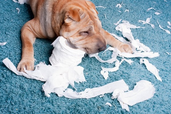 Boredom and anxiety are just two of the many reasons your dog may develop destructive habits.