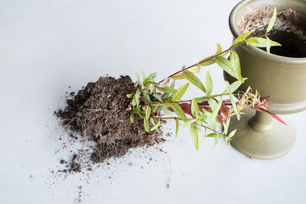 how to avoid mold in house plants