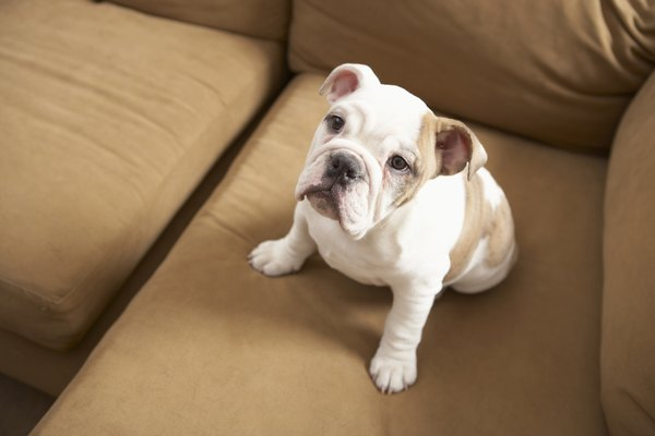 With permission, your puppy can enjoy the couch just like you do.