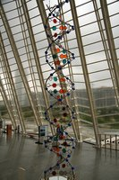 A 3-D DNA model does not have to be difficult to build.