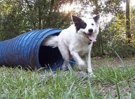 How to Design a Backyard Playground for Dogs | eHow